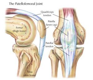 anatomi lutut
